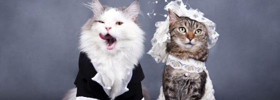 Wedding Advice via Cats from NJ Wedding Venue Pro